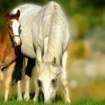 Poznáte súčasné trendy v chovateľstve? Viete, že existuje aj kozmetika pre kone?
