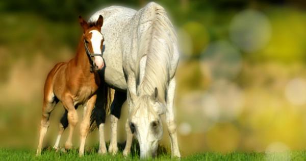 Poznáte súčasné trendy v chovateľstve Viete, že existuje aj kozmetika pre kone
